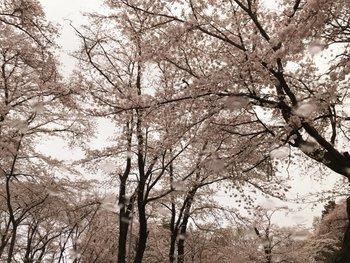 お花見会-5.jpg